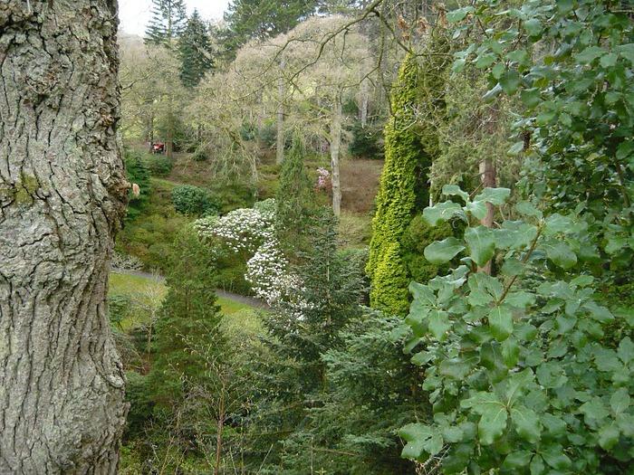 образцовый сад – волшебный Bodnant Garden 62436