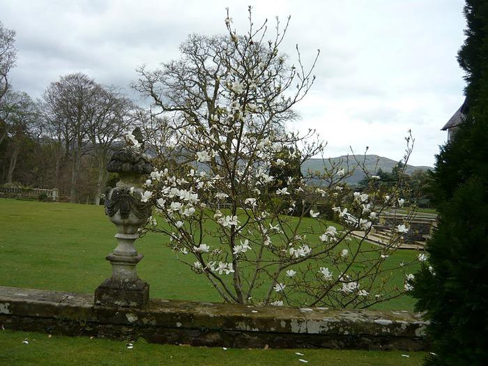 образцовый сад – волшебный Bodnant Garden 63858