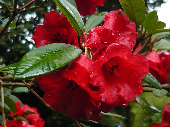 образцовый сад – волшебный Bodnant Garden 81275