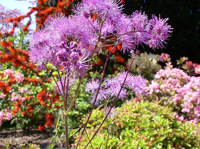 образцовый сад – волшебный Bodnant Garden 23539