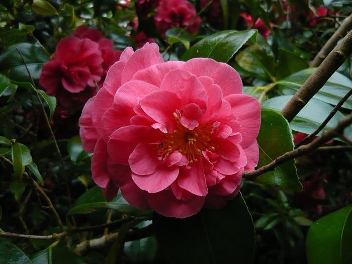 образцовый сад – волшебный Bodnant Garden 54951