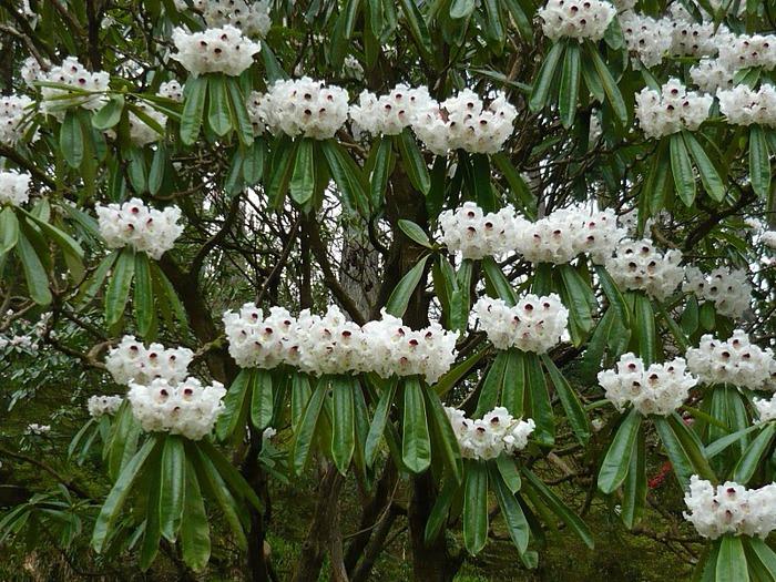 образцовый сад – волшебный Bodnant Garden 39730