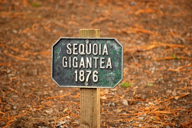 образцовый сад – волшебный Bodnant Garden 79288
