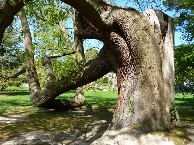 образцовый сад – волшебный Bodnant Garden 12782