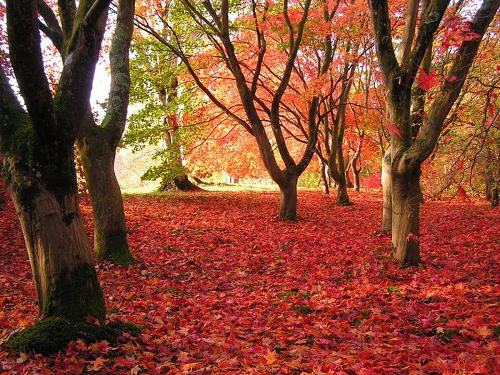образцовый сад – волшебный Bodnant Garden 81977
