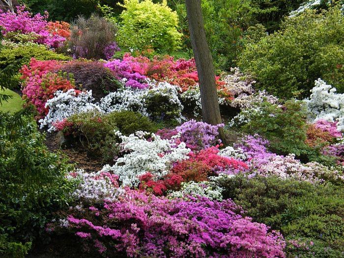 образцовый сад – волшебный Bodnant Garden 68506