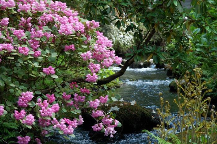 образцовый сад – волшебный Bodnant Garden 47684