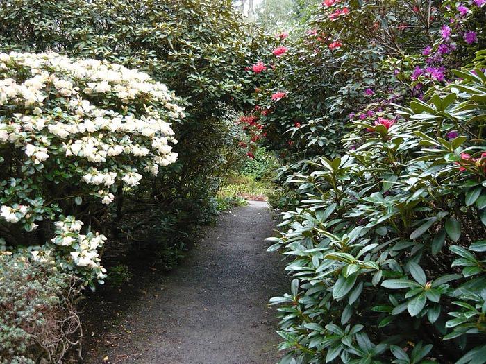 образцовый сад – волшебный Bodnant Garden 53936