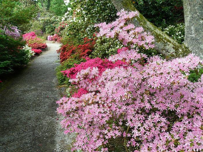 образцовый сад – волшебный Bodnant Garden 96381