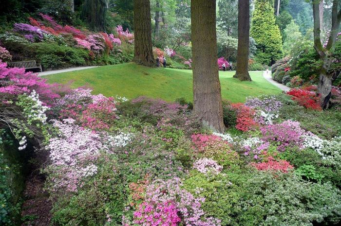 образцовый сад – волшебный Bodnant Garden 96802