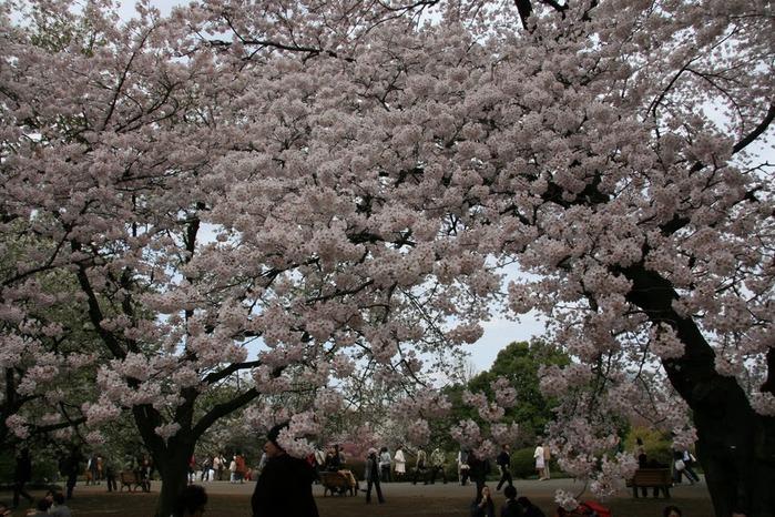 Shinjuku Gyoen - Парк Синдзюку 96040