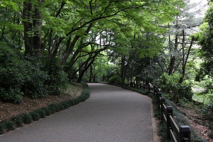 Shinjuku Gyoen - Парк Синдзюку 76768