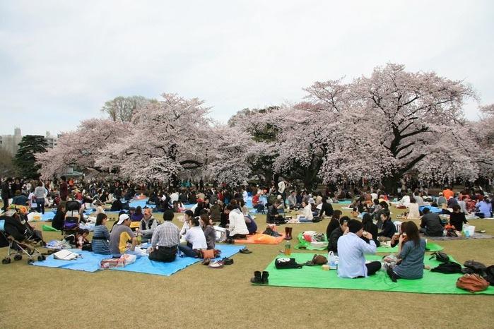 Парк Синдзюку - один из наиболее огромных парков Токио 6