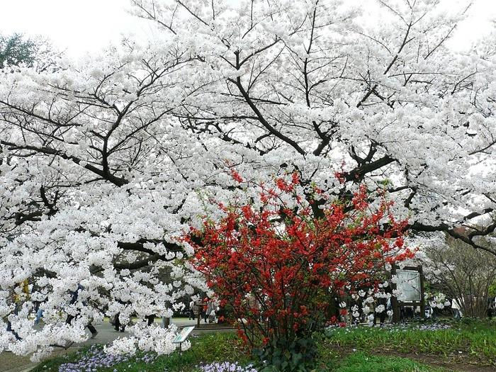 Парк Синдзюку - один из наиболее огромных парков Токио 17