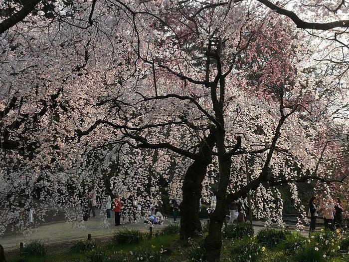 Парк Синдзюку - один из наиболее огромных парков Токио 19