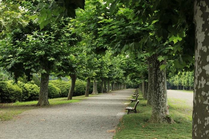 Парк Синдзюку - один из наиболее огромных парков Токио 5