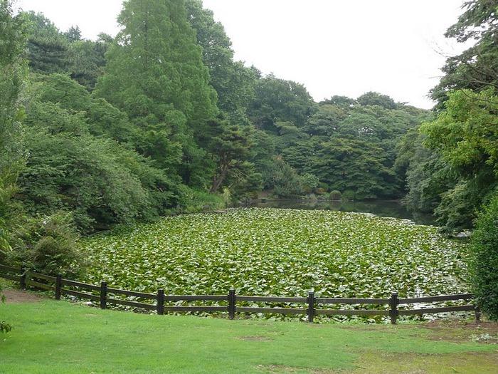 Shinjuku Gyoen - Парк Синдзюку 55465