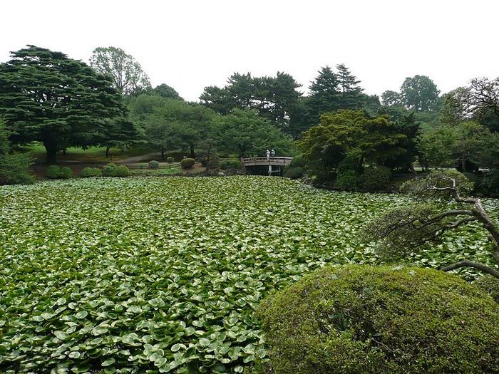 Shinjuku Gyoen - Парк Синдзюку 24313