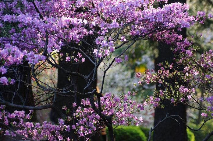 Shinjuku Gyoen - Парк Синдзюку 24234