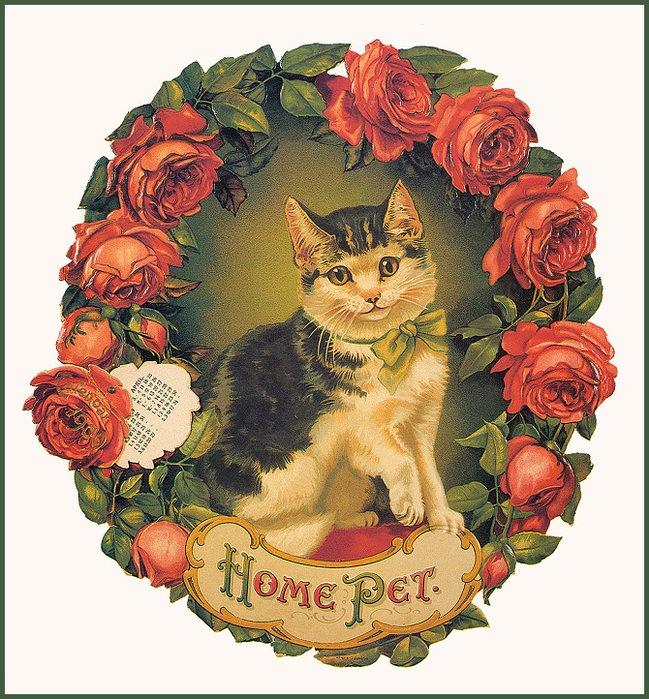 Винтажные открытки с котами 9