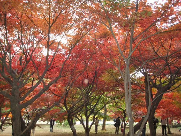 Shinjuku Gyoen - Парк Синдзюку 26313
