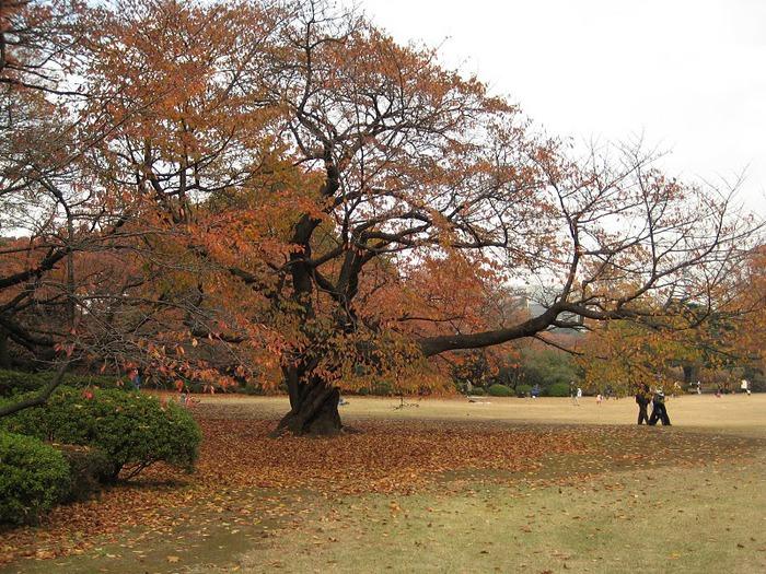 Shinjuku Gyoen - Парк Синдзюку 90578