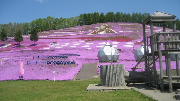 Higashi Mokoto Shibazakura Park 68490