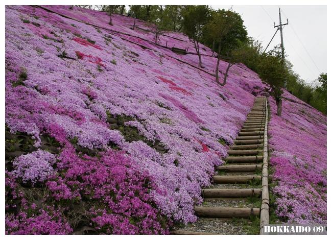Higashi Mokoto Shibazakura Park 49853