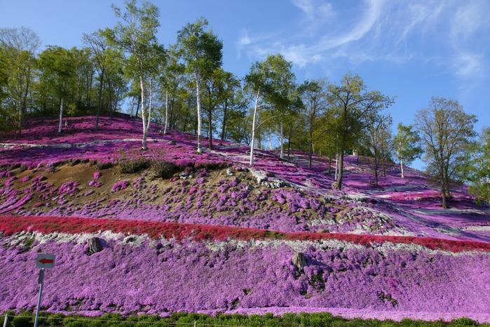 Higashi Mokoto Shibazakura Park 24520