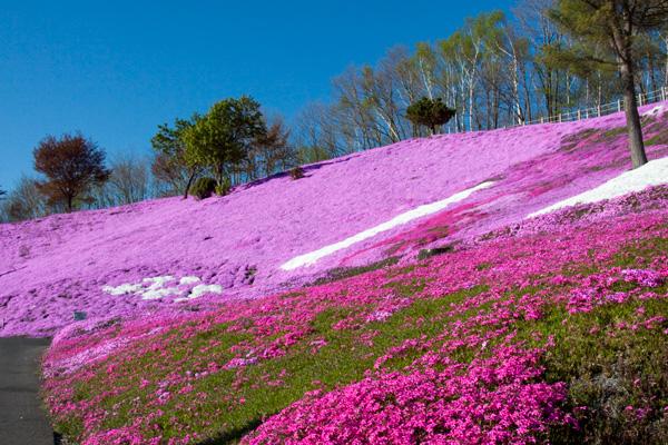 Higashi Mokoto Shibazakura Park 97516
