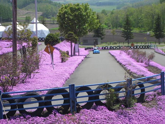 Higashi Mokoto Shibazakura Park 29742