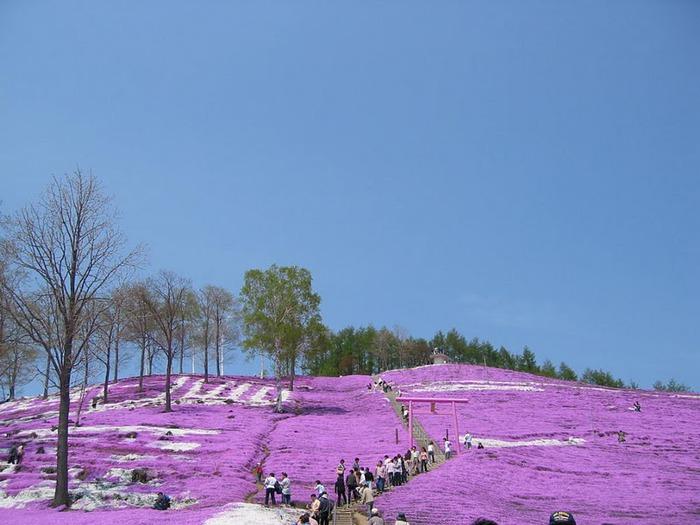 Higashi Mokoto Shibazakura Park 29907
