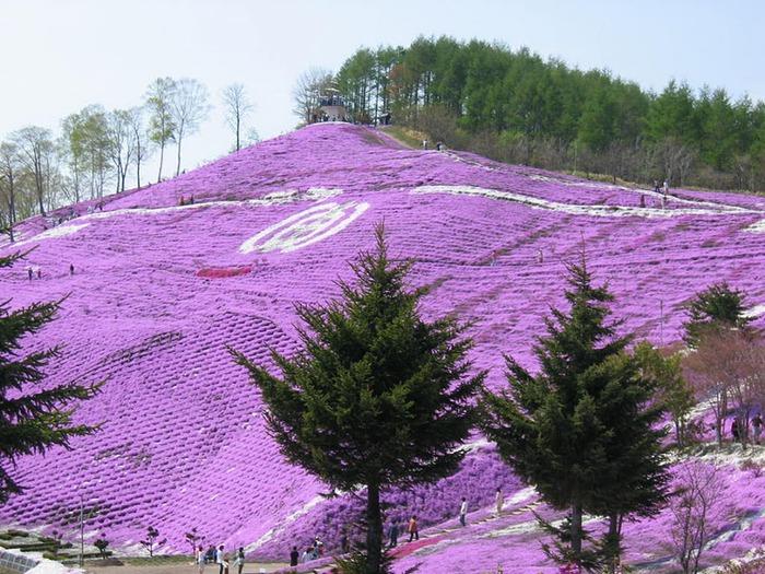 Higashi Mokoto Shibazakura Park 57124