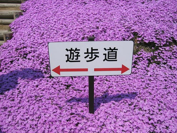 Higashi Mokoto Shibazakura Park 60350