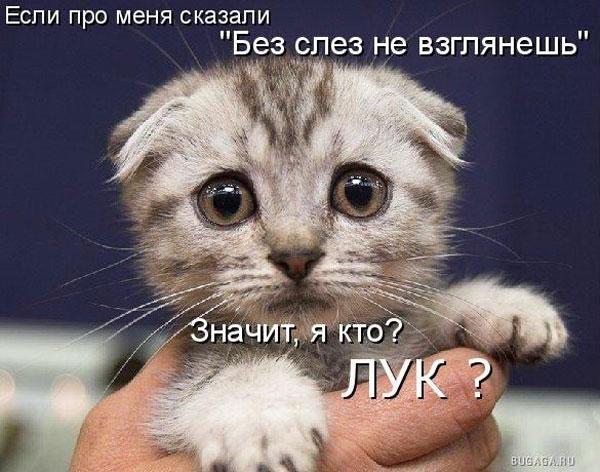 http://img0.liveinternet.ru/images/attach/c/1/45/771/45771172_b7fc2e6a02c1.jpg
