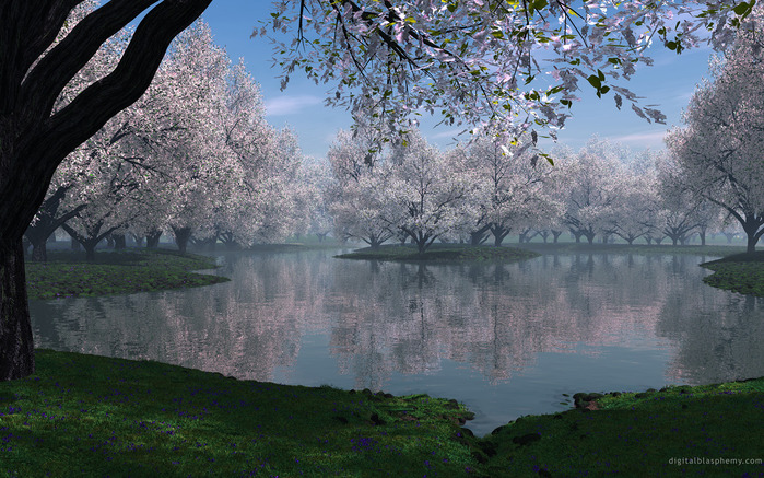 100th anniversary of the Cherry Blossoms Presentation 3700 trees Washington DC from Japan Symbol of friendship...