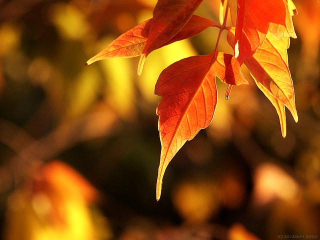 теплая осень...желтые листья и солнечный зайчик на щеке.