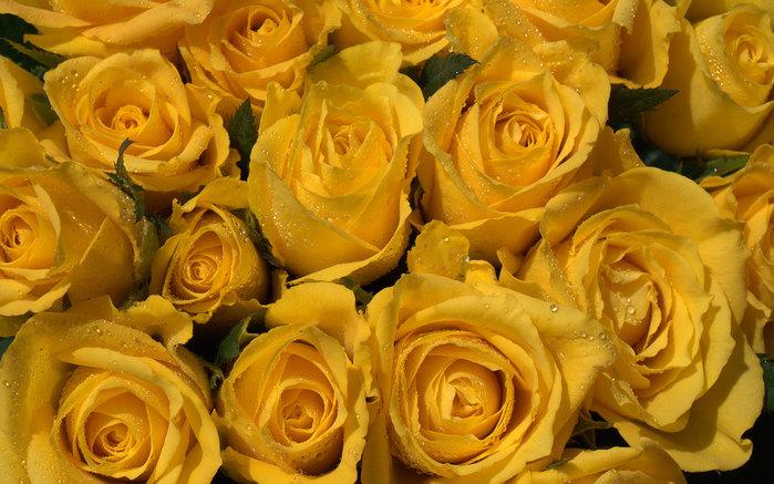 Рамка для фото желтые розы рамочка