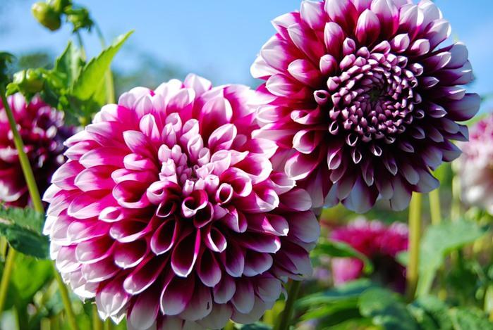 Выращиваем вязаный цветок