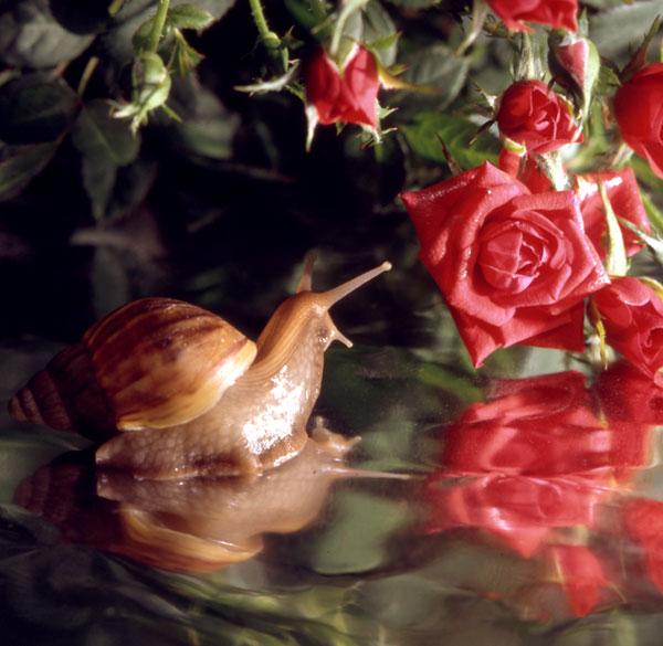 http://img0.liveinternet.ru/images/attach/c/1/49/441/49441097_2024370.jpg