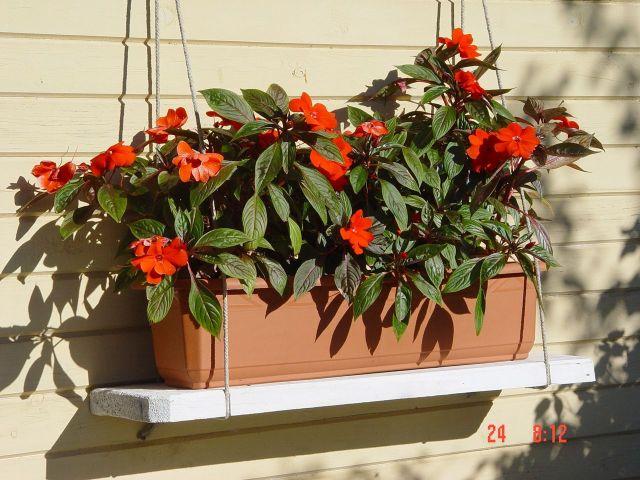 Jerome : цветы для балконных ящиков на лето.