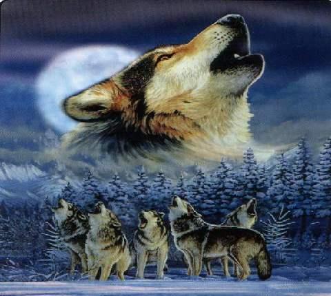 схему волк для вышивки крестом
