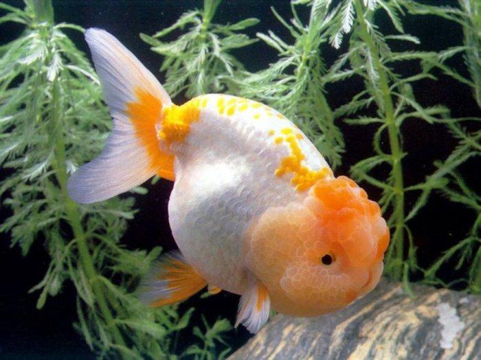 b Аквариумные рыбки /b- гармония вокруг.