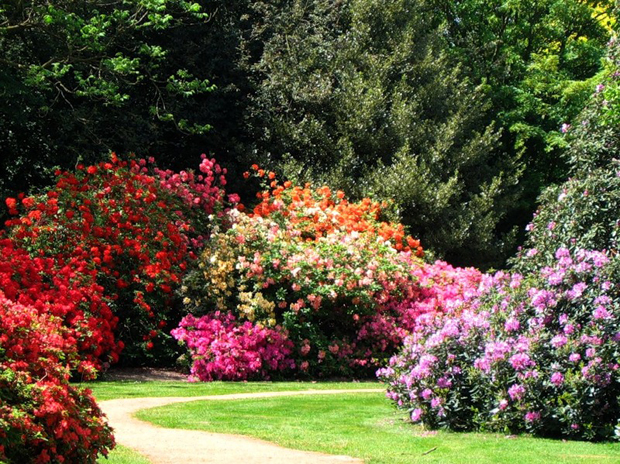 Цветущие комнатные растения  цветущие растения в горшках