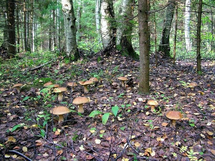 ВПрокопьевске старый грибник переночевал влесу из-за сердечного приступа