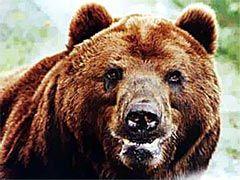 Новость на Newsland: Почему Запад боится русского медведя?