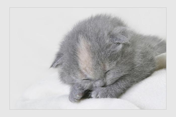 И снова фото кошек смотреть не