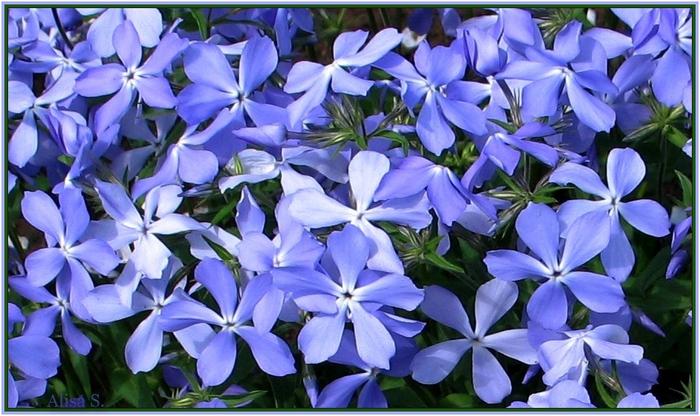 Это цветы переговариваются между