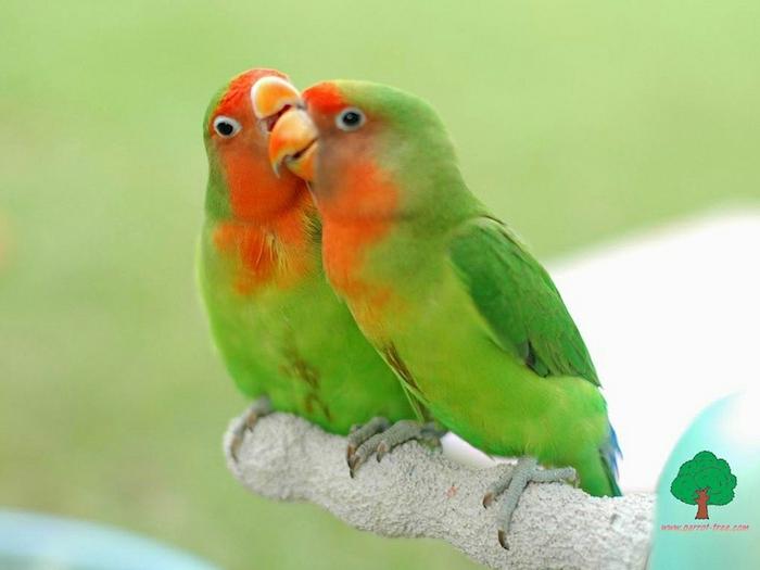 папугай - Это бисер!