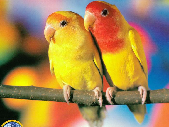 ...птицы.  Самое интересное, что грабителей интересовали